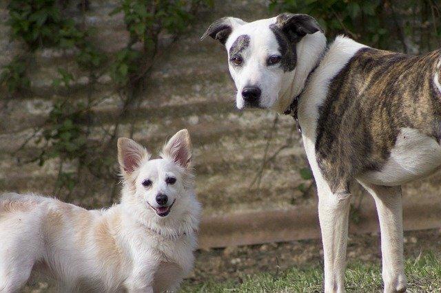 Ecco il significato di alcuni gesti e comportamenti del cane