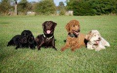 Come scegliere il cane adatto a noi: alcuni consigli