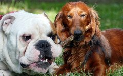 Zuffa tra cani: cosa fare e come intervenire
