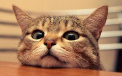 Ah, don´t we love cat pictures? But funny cat pictures are even better! Brighten up your day with these funny pictures that will definitively put on a grin.