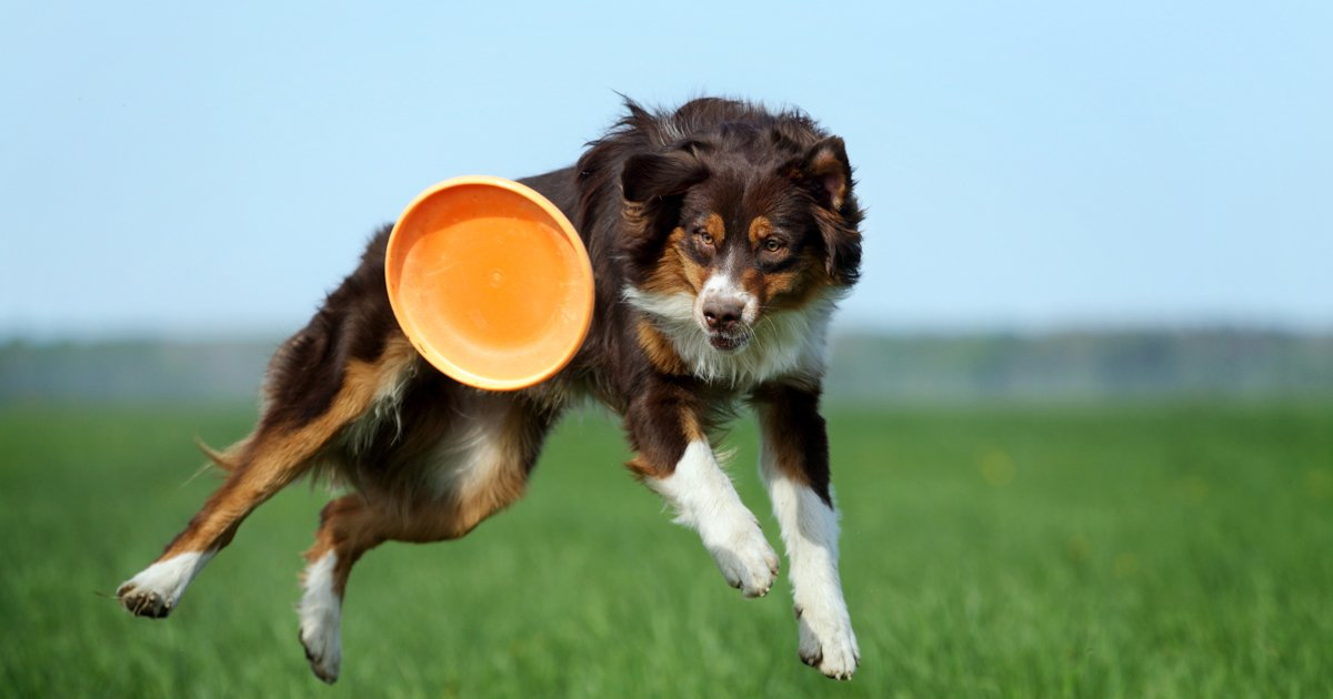 Play fun dog games with your pooch outdoors or indoors if the weather doesn´t allow. Playing with your dog is important to their healthy development.