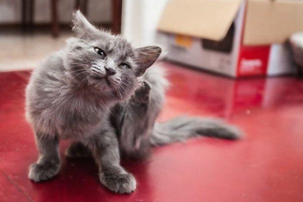 Razas de Perros: Alergias del gato caracteristicas