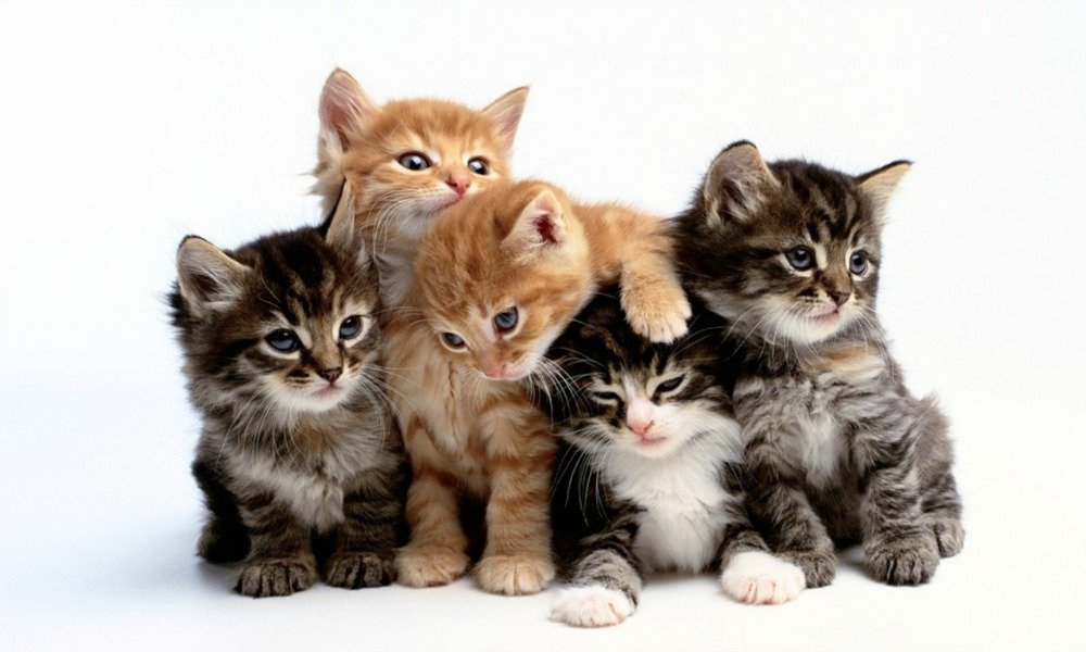 National Cat Day is a celebration that takes place in the United States on October 29 of every year. The celebration was founded by Colleen Paige.