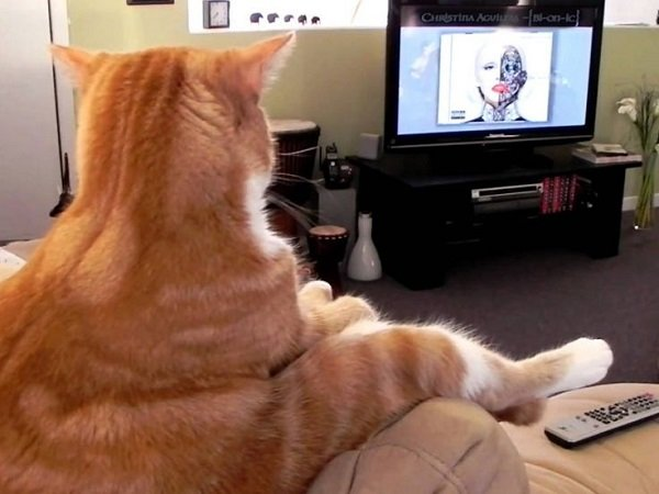 Videos for Cats