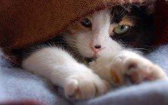 Razas de Perros: Filaria Felina o gusano del corazón sintomas