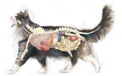 Sistema endocrino del gato: las hormonas y el comportamiento
