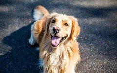 Malattie del cane che inducono dimagrimento