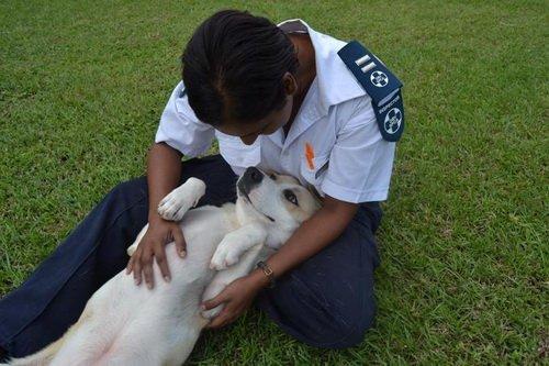 Hero, il cane rimasto accanto all'amico ferito