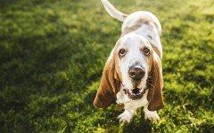 The Best Medium-Sized Dogs