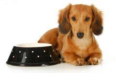 Comprar comida perro: ¿cómo elegirla?