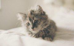 I gatti hanno un palato molto esigente? Ecco perché
