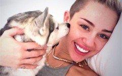 Miley Cyrus cani