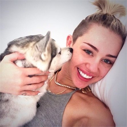 Miley Cyrus cani