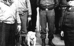Qual è la razza del cane del Generale Patton?