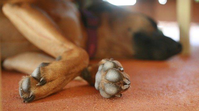 Enfermedades de los perros en las patas: un problema común