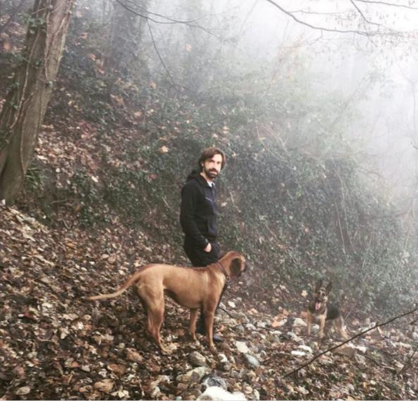 Andrea Pirlo, calciatore e amante dei cani
