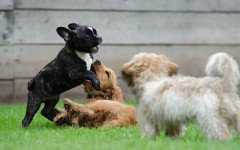 Take your pet to socialize at a dog park