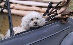 Animali in vacanza in macchina: i problemi che possono riscontrare