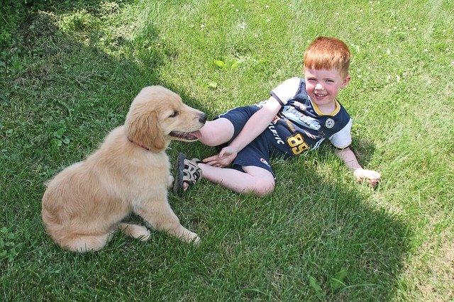 I cani percepiscono i sorrisi umani: gli esperimenti