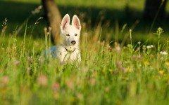 Ecco i nomi per cani più utilizzati: scomparsi quelli tradizionali