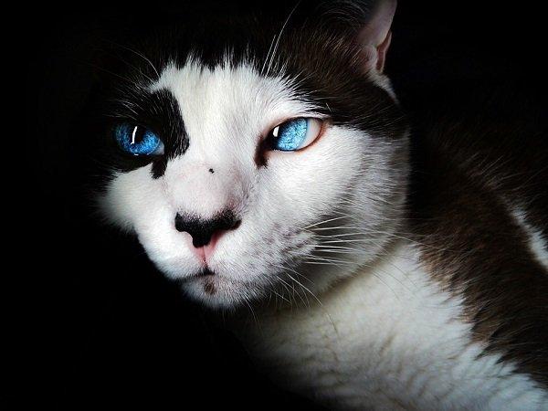 Enfermedades Felinas: Rinotraqueitis felina sintomas