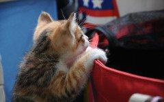 Battaglie non vinte dai proprietari dei gatti: quali sono?