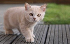 Inmunodeficiencia felina: cuidados a largo plazo