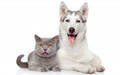 Perros y gatos graciosos: lo mejor del internet