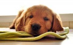 cómo alimentar a un perro recién nacido