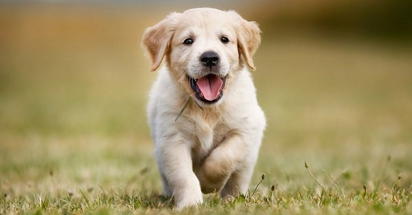 Cachorros gratis: ¿Es buena idea obtener cachorros gratis?
