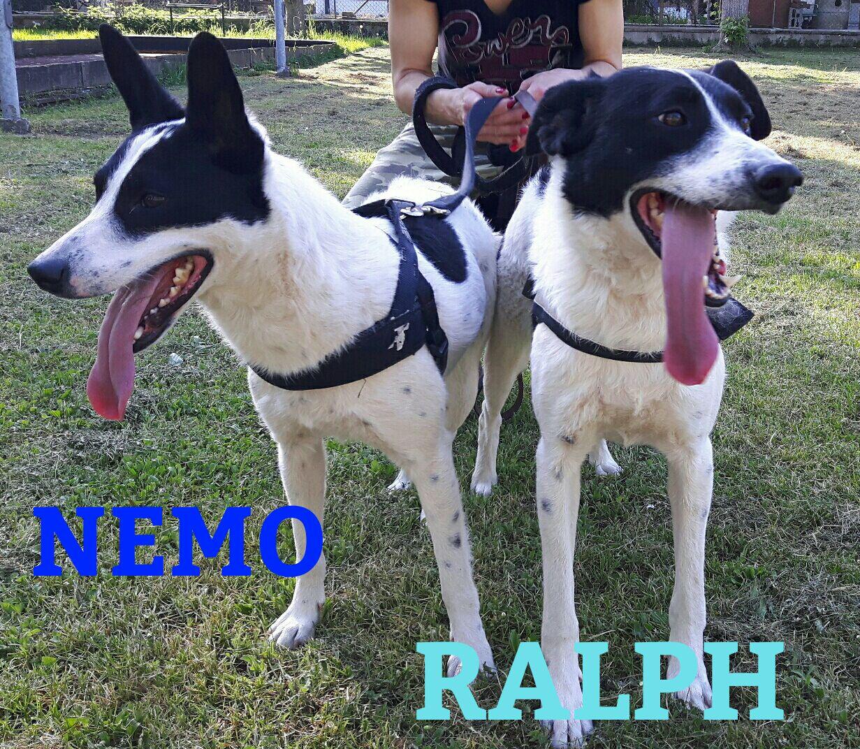Appello per adozione: Nemo e Ralph cercano casa!