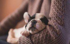 Perros domésticos: siglos con la humanidad