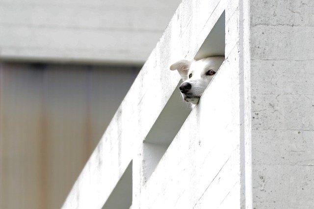 Cane lasciato sul balcone si lancia nel vuoto