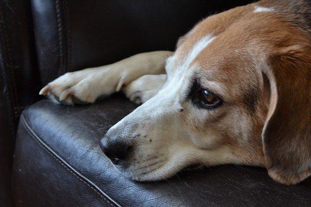 malattie del cane