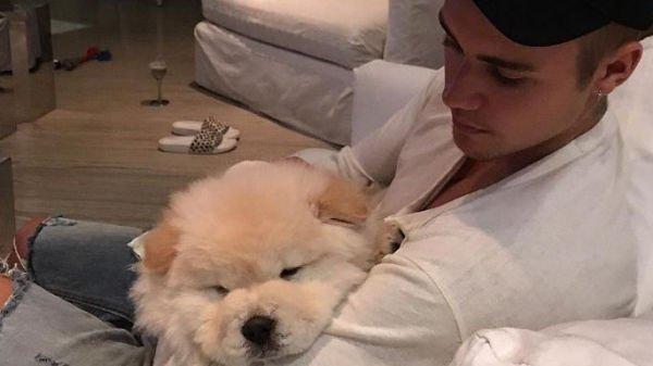Justin Bieber: un proprietario di animali poco attento
