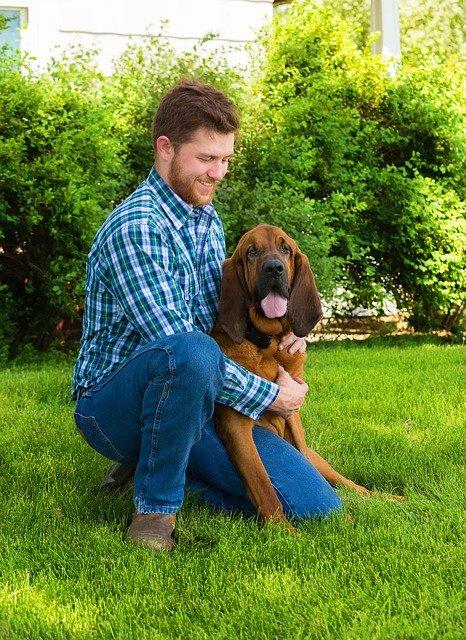 Gerarchia tra cane e proprietario: chi deve essere capobranco?