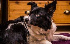 Il cane in condominio deve essere tenuto al guinzaglio?