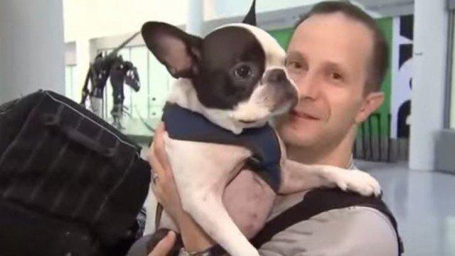 dirotta l' aereo per salvare un cane