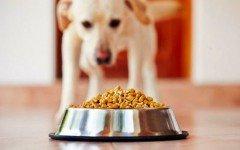 Comprar comida de perro: consejos prácticos