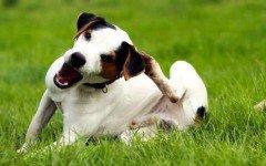 Enfermedades de la piel de los perros: lo que debes saber