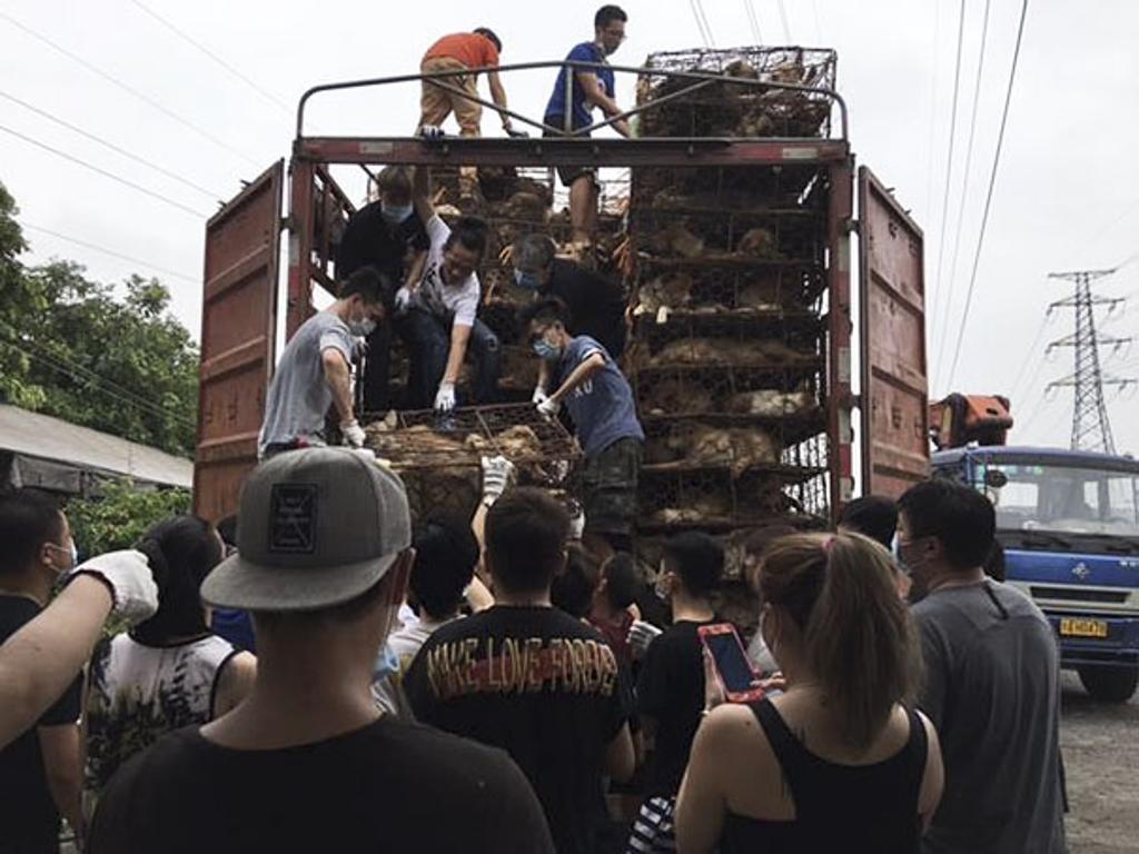 Cani salvati dal macello: fermato un camion dagli attivisti