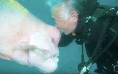 Hiroyuki Arakawa, il subacqueo amico di un pesce