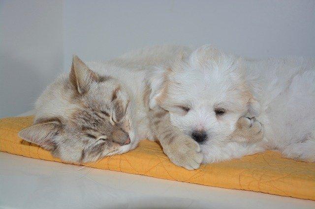 Tumori neuroendocrini nel cane e gatto