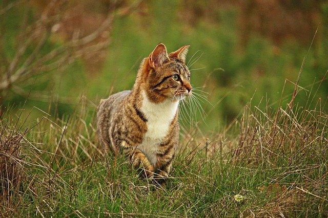Alimentazione del gatto a 5 mesi: come deve essere?