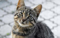 Broadline per gatti: un valido aiuto per le infezioni