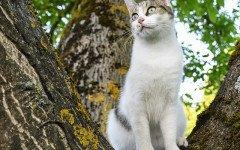 Strongili nel gatto: sintomi e cure della patologia