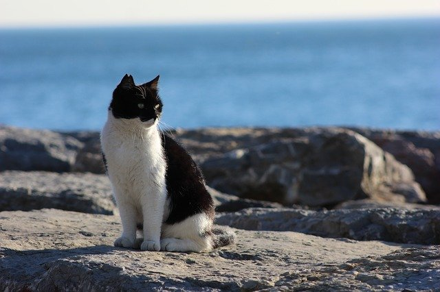 Al mare con il gatto, consigli per i nostri amici felini