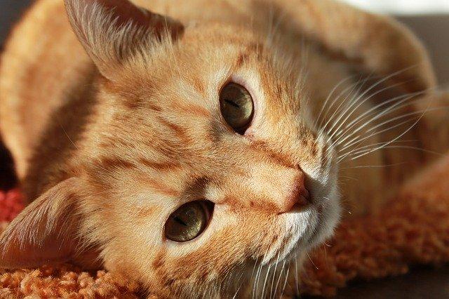 cat life expectancy