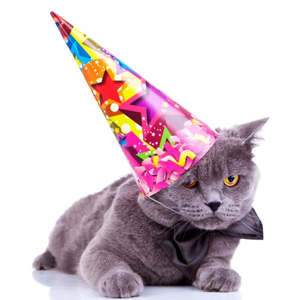Happy Birthday Cat The Best Way To Congratulate You
