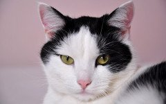 Polipi nasofaringei nel gatto